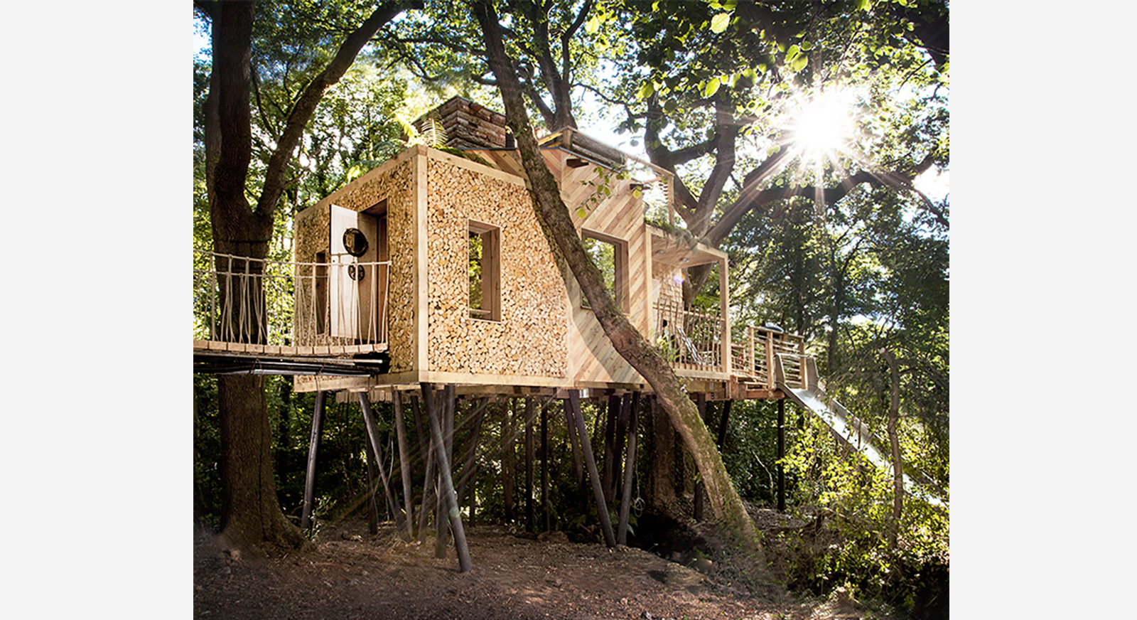 Holiday home for rent: Woodman's Treehouse in Dorset