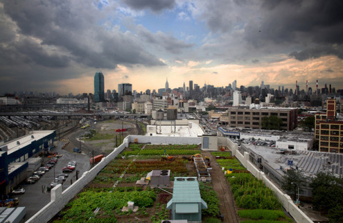 Bromley Caldari Architects create a 42,000 sq ft rooftop farm in New York