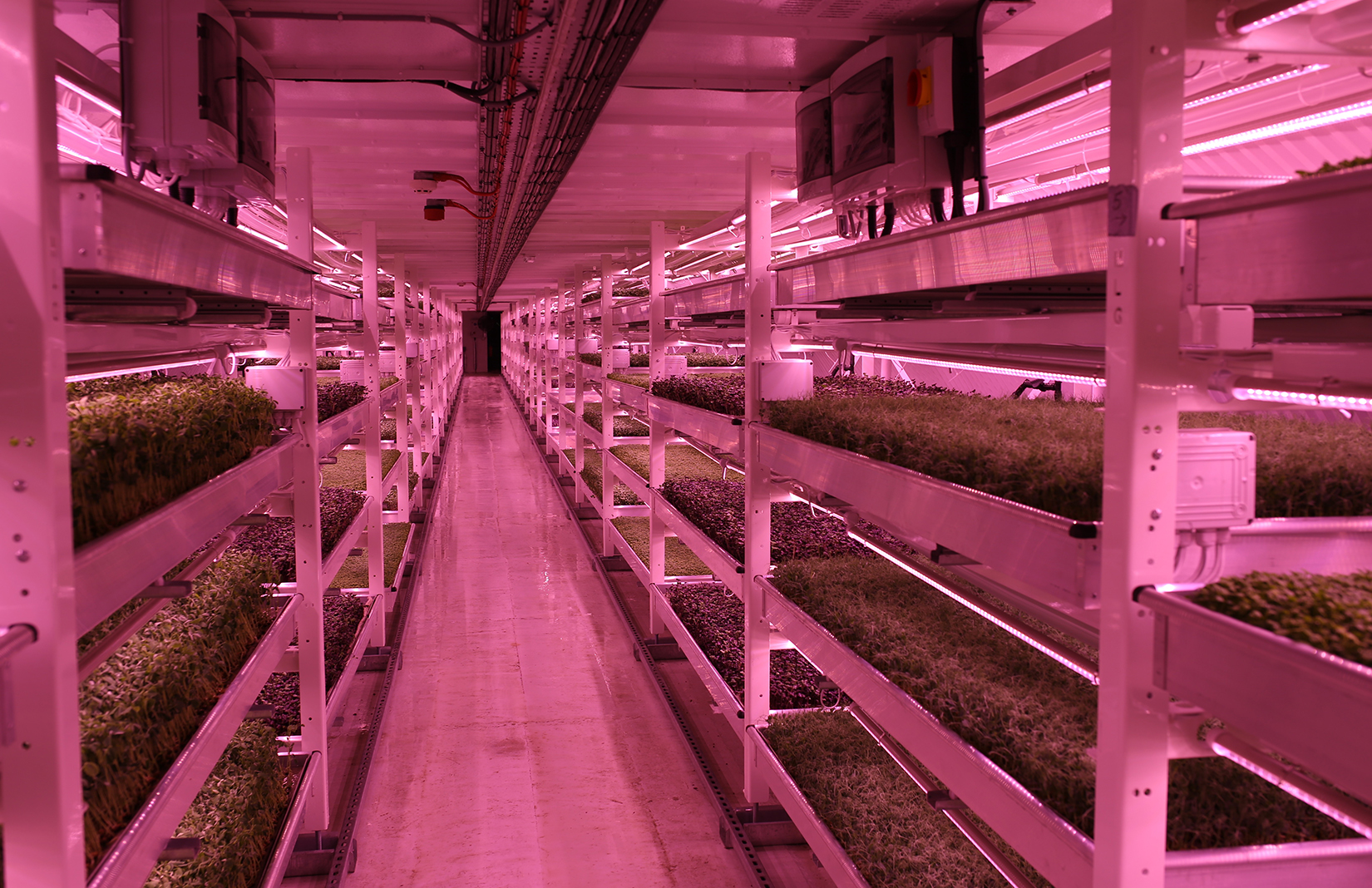 London's first ever underground farm