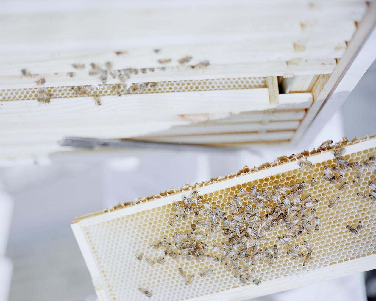 High rise honey series by Dan Mariner