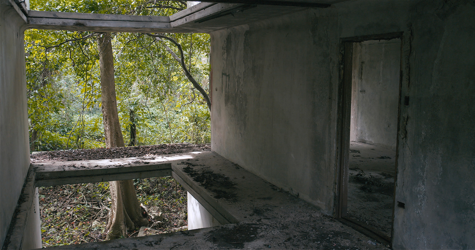 David Hartt, still from <em>In The Forest</em>, 2017. Courtesy of Corbett vs. Dempsey and commissioned by the Graham Foundation for Advanced Studies in the Fine Arts