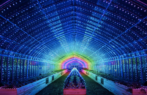Psychedelic digital greenhouse springs up in Tokyo