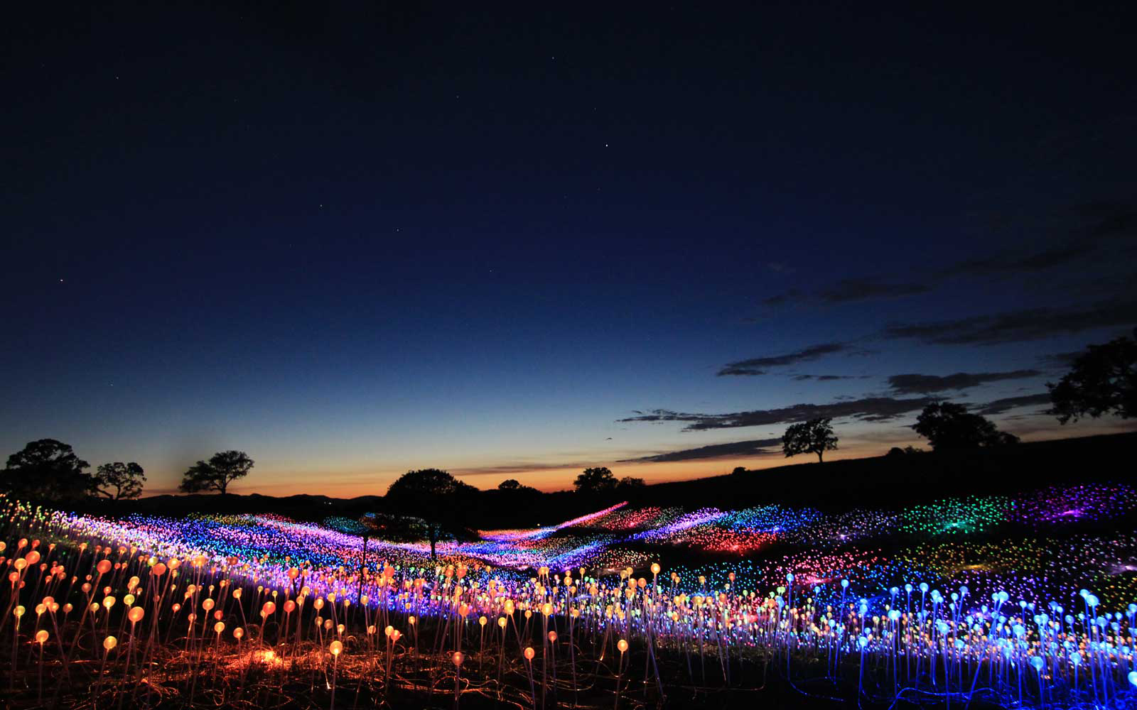 Nearly 60,000 twinkling LEDs light up the hills of Californian wine country