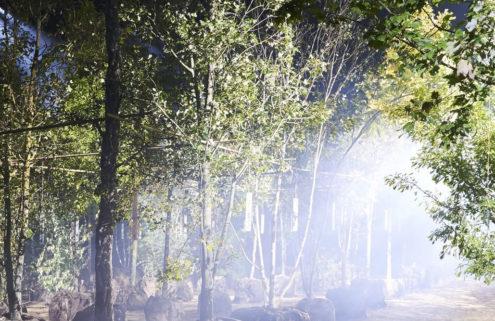 Dior grows a secret garden for its SS20 show