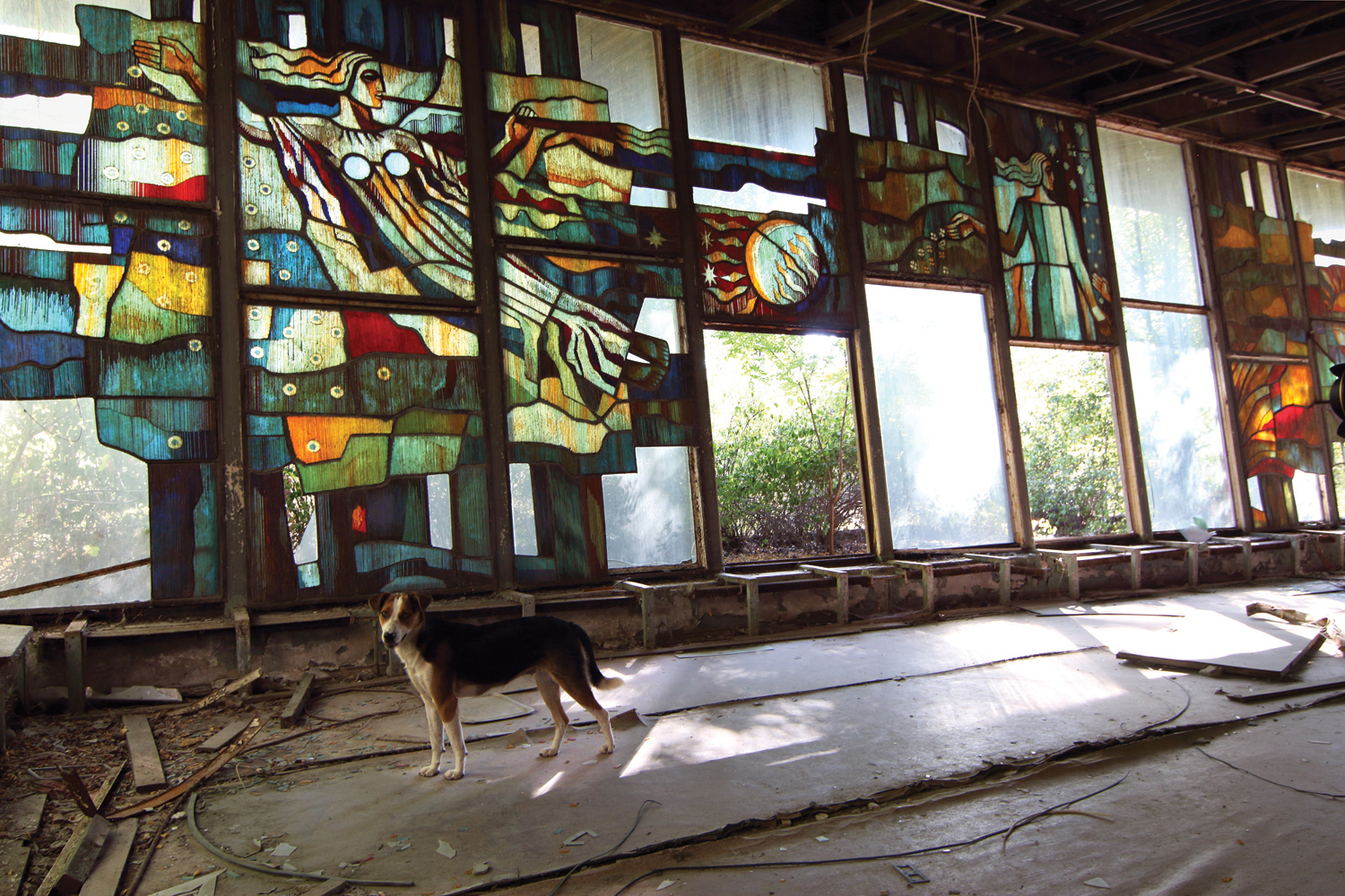 Pripyat Café. This building and its striking stained-glass windows are currently being preserved by a privately funded project. The city is still home to numerous stray dogs, descendents of pets left by evacuees, who are often fed by tourists. © Darmon Richter / FUEL Publishing